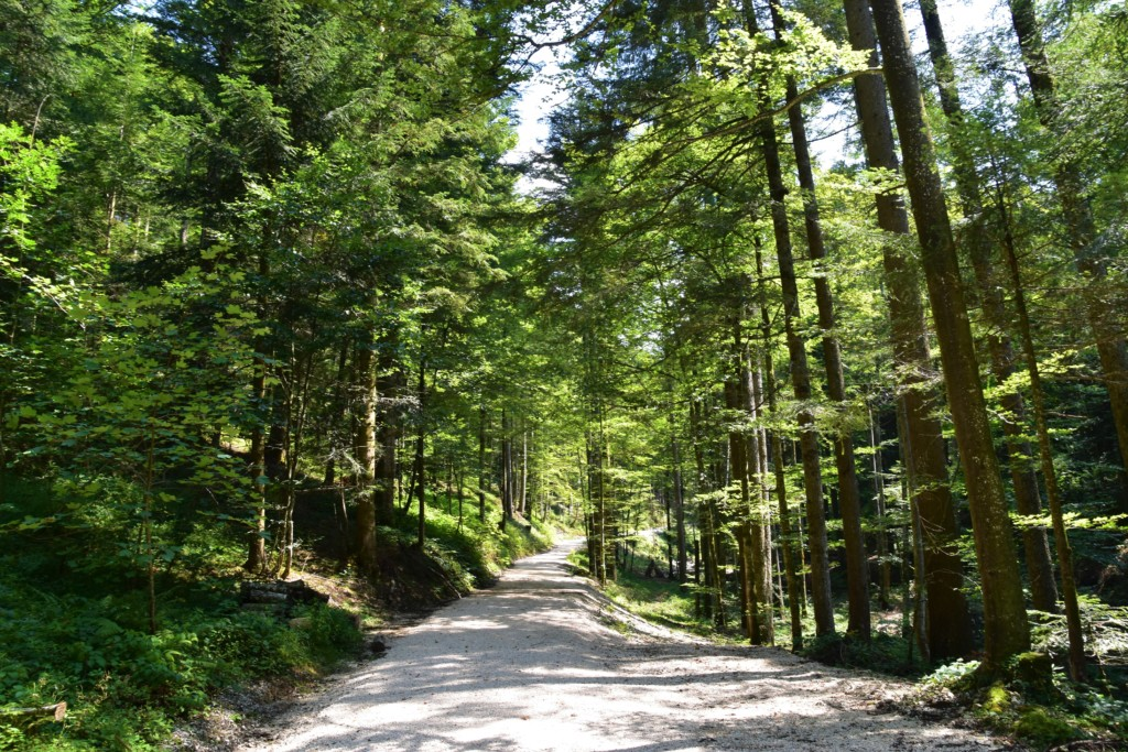 wooded gravel road