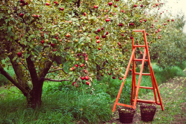 Apple Orchards, Pumpkin Patches & More | Rochester Mom